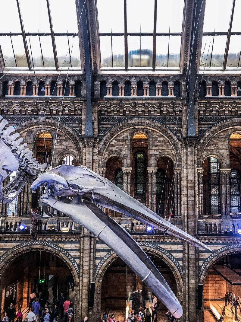City guide Londres blog voyage By Opaline musée d'histoire naturelle